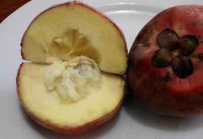 manfaat-buah-langka-bisbul-untuk-kesehatan-tubuh